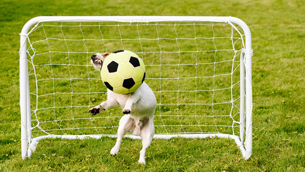 dog in soccer goal