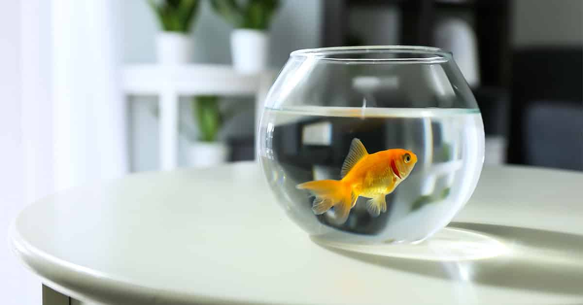 How Being a Goldfish Can Improve Your Staffing Customer Service